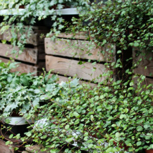 Strukturpflanzen und Bodendecker