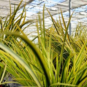 Gräser und Blattschmuckpflanzen