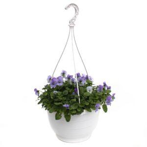 Viola cornuta Ampel blau